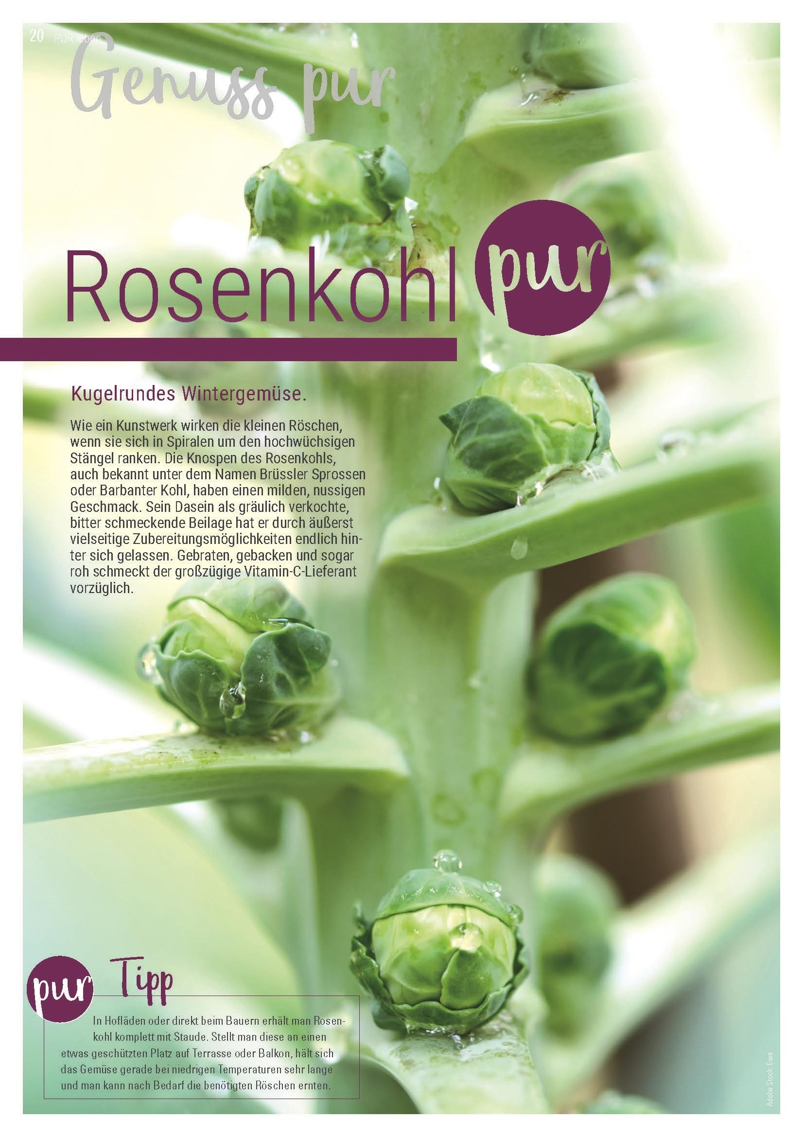 Artikel Rosenkohl